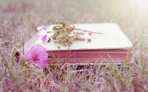Picture flower, grass, book