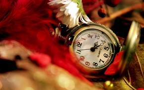 Picture flower, leaves, watch, feathers, Daisy, red, pocket