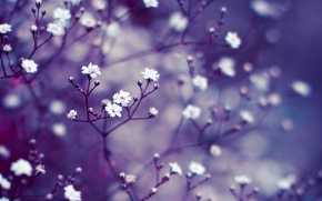 Picture macro, branches, background, lilac, Flowers, blur, buds