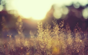 Picture field, the sun, light, nature, plants, day