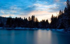 Wallpaper trees, snow, Water, winter