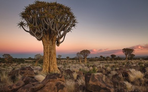 Picture trees, landscape, stones, Africa, Namibia