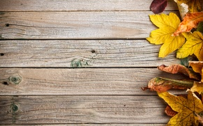 Picture background, tree, colorful, wood, texture, autumn, leaves, autumn leaves