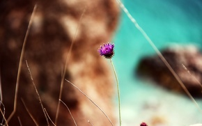 Picture sea, beach, flower, nature, rock