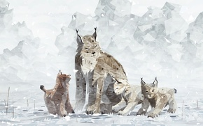 Picture the game, lynx, shelter2