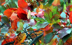 Picture autumn, leaves, macro, branches