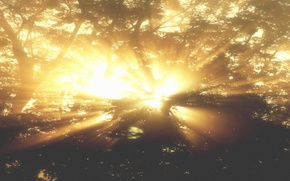 Picture Nature, Fog, Trees, Sun Ray