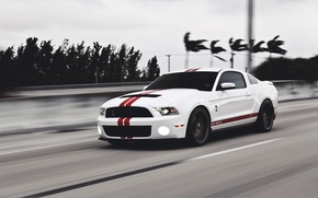 Picture road, white, speed, Mustang, Ford, Shelby, Mustang, muscle car, Ford, muscle car, gt500, red stripes