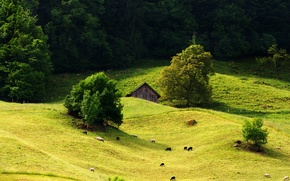 Picture forest, grass, tree, hills, sheep, meadow, house