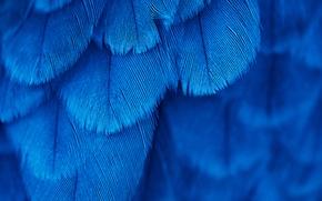 Wallpaper bird, texture, feathers, blue