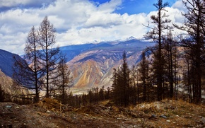 Picture clouds, trees, landscape, mountains, nature, shore, Altay, Republic