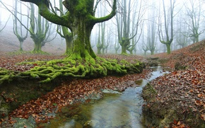 Picture autumn, forest, trees, roots, stream, moss