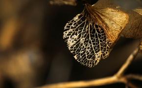 Wallpaper macro, twigs, nature, leaves