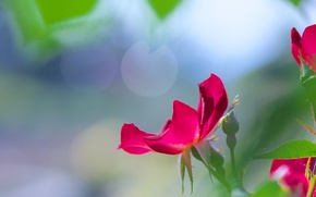 Picture macro, flowers, mood, pink, petals