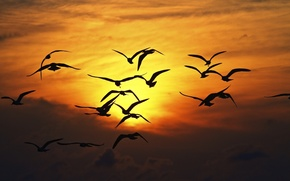 Picture the sky, freedom, the sun, flight, sunset, birds, nature, background, widescreen, Wallpaper, seagulls, wings, Seagull, ...