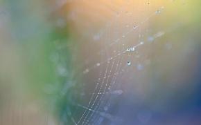 Picture drops, web, bokeh