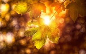 Picture autumn, sheet, treatment