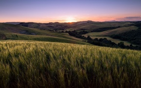 Picture field, landscape, sunset, Tuscany, Volterra