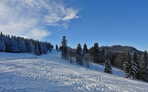 Picture forest, winter, snow