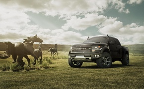 Picture field, the sky, black, Ford, horse, black, Ford, Raptor, Raptor, F-150