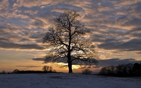 Picture field, the sky, clouds, snow, trees, sunset, Winter, the evening