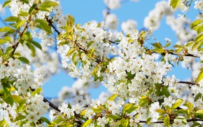 Picture the sky, the sun, branches, tree, beauty, spring, flowering, plum