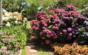 Picture flowers, Park, Nature, plants, spring, garden, flowering, the bushes, nature, park, flowers, garden, spring, flowering