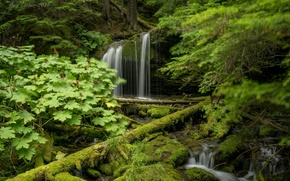Picture greens, forest, trees, waterfall