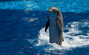 Picture water, Dolphin, smile