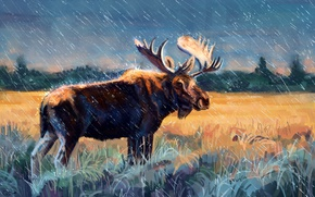 Picture field, forest, grass, rain, figure, horns, moose, elk