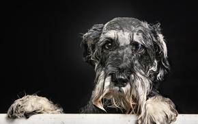 Picture look, each, dog, bath, doggie, Wet portrait