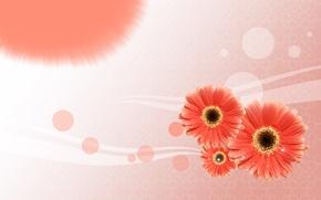Picture flowers, postcard, line, gerbera, circles, Wallpaper