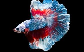 Wallpaper fish, blue, flakes