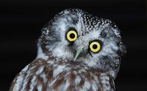 Picture the dark background, owl, bird, head, tail