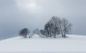 Picture winter, snow, trees, nature, fog