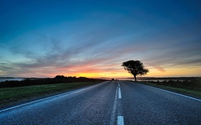 Picture road, the sky, trees, the way, the way, tree, road, the evening, sunsets