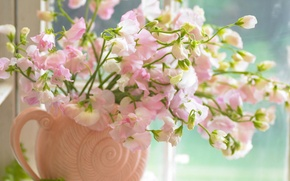 Picture flowers, pink, bouquet, window, vase