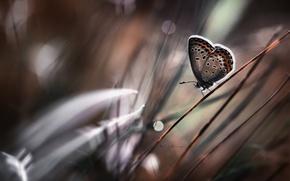 Wallpaper bokeh, grass, butterfly, stem