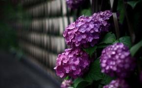 Picture flowers, wall, Bush, petals