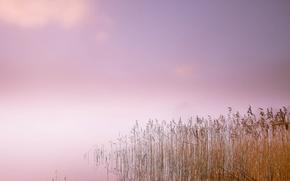 Picture fog, lake, morning, reed