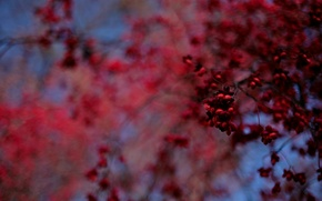 Picture blue, red, Tree, blur, fruit, bokeh