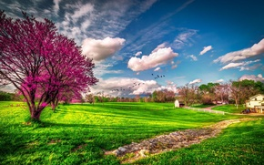 Picture greens, grass, clouds, tree, spring, USA, flowering, farm, Missouri