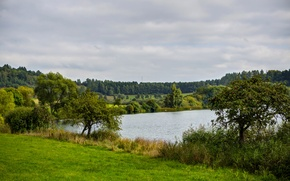 Picture grass, nature, lake, photo, Germany, the bushes, Ellscheid