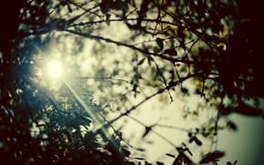 Wallpaper summer, leaves, the sun, rays, trees, branches, nature, photo, background, branch, Wallpaper, pictures, plants, blur, ...