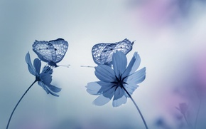Picture butterfly, flowers, nature, garden, Blue tones