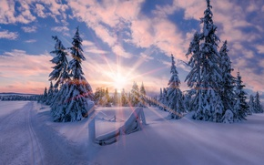 Picture winter, the sun, light, snow, star, morning, Norway