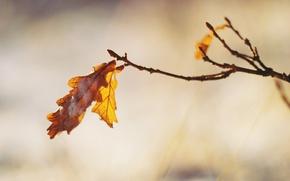 Picture sheet, branch, oak