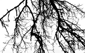 Picture the sky, mood, white background, black and white, Branch