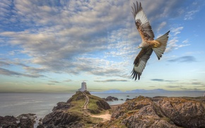 Picture sea, the sky, clouds, flight, mountains, stones, rendering, rocks, eagle, shore, lighthouse, tower, art, Wallpaper ...
