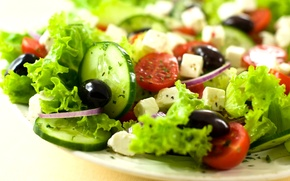 Wallpaper cheese, bow, tomatoes, cucumbers, salad, olives